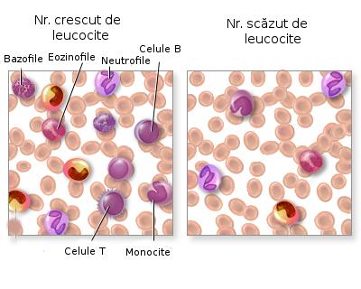 Leucocitele